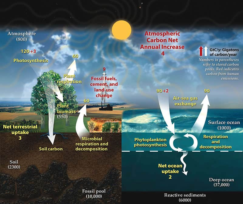 What is a carbon sink