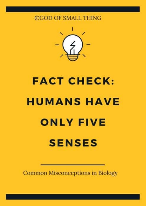 Common Misconceptions in Biology: Humans have only five senses
