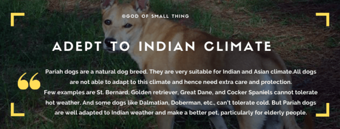 Qualities of Desi Dogs