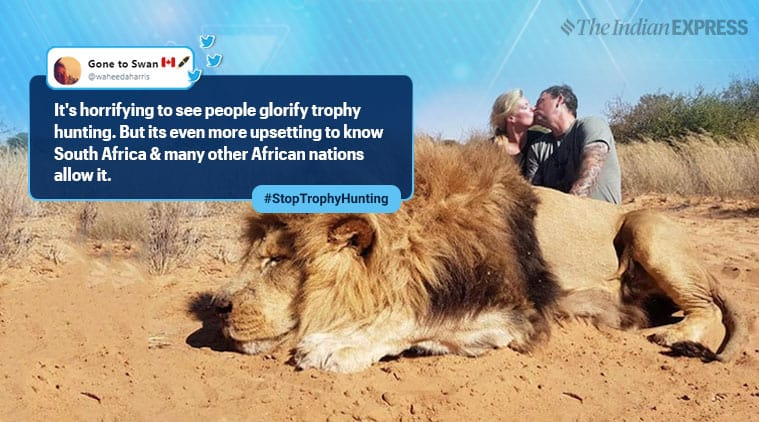 Canadian couple kissing next to hunted lion attracts criticism