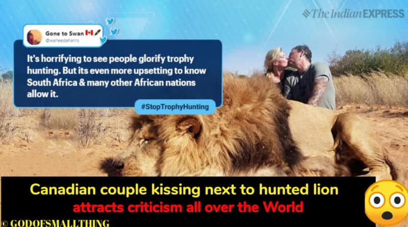 Canadian couple kissing next to hunted lion attracts criticism all over the World