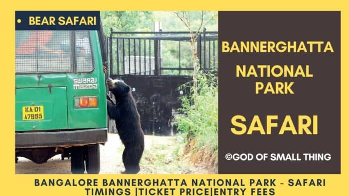 Bannerghatta National Park Bear safari