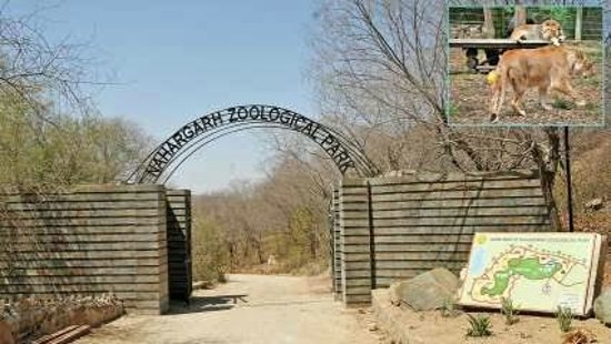 Places to Visit in Jaipur With Family: Jaipur Zoo