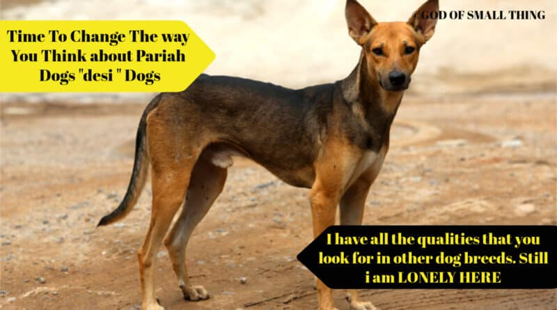 """It's Time To Change The way You Think about Pariah Dogs """"desi """" Dogs. - God of Small Thing"""